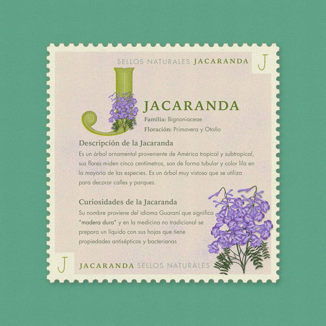 J-jacaranda-description-sellos-naturales-ibelis-garzon