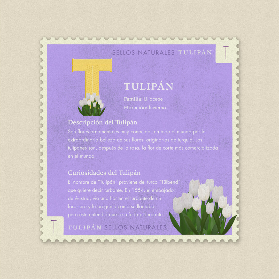 T-tulipan-description-sellos-naturales-ibelis-garzon